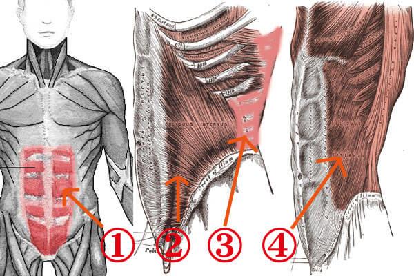 ウエスト周りの筋肉4種